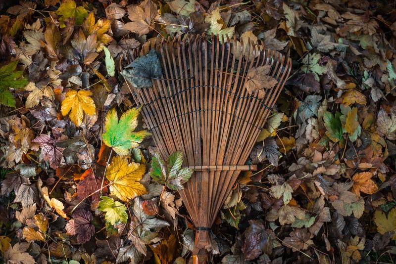 chores kids can do raking leaves